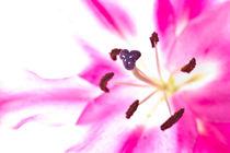 Pink Dream von Waldemar Moll
