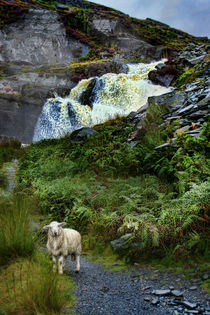 Guardian of the Falls by Graeme Pettit