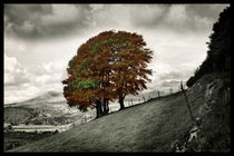 Slopes of Autumn by Graeme Pettit