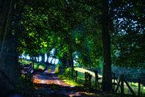 The Old Lane by Graeme Pettit