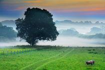 Monmouth Morning Mists von Graeme Pettit