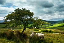 Two & a Tree by Graeme Pettit