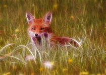 Cute Fox Cub by Graham Prentice