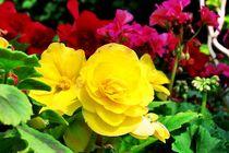 calender - april - flowers II by Oliver Metz