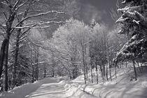 winterwonderland von Andreas Levi