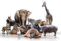 Wilde Tiere von Werner Dreblow