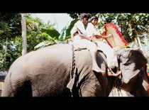 elephant ride von anupama sadasivan