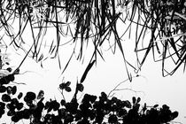 Reflections of reeds and leaves in water by kbhsphoto