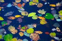 Autumn leaves on water surface by kbhsphoto