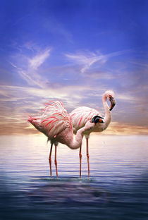 Flamingos am Abend by Werner Dreblow