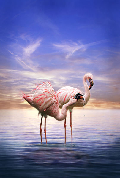 Flamingosamabendvk