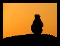 Sunset Silhouette von serenityphotography