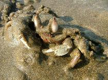 Undercover-crab