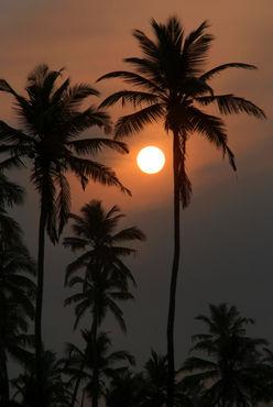 Palm-trees-at-sunrise-benaulim