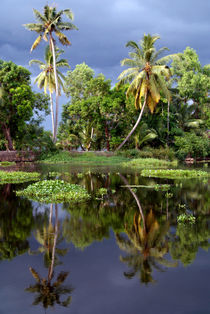 Palm-trees-in-a-storm-kerala-04