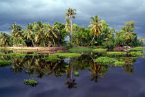 Palm Trees in a Storm Kerala by serenityphotography