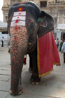 Laxmi-the-temple-elephant-hampi