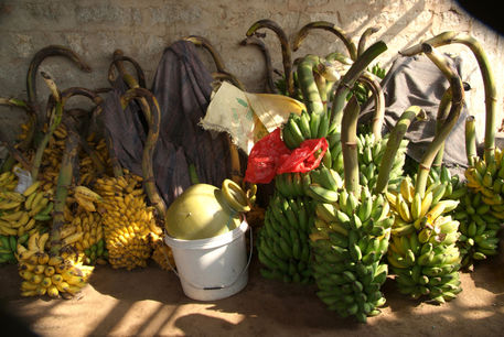 Bunches-of-bananas-hanuman-temple