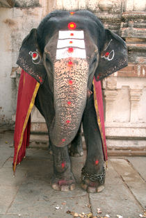 Laxmi the Elephant in Hampi Temple by serenityphotography