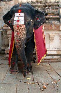 Laxmi-the-elephant-in-hampi-temple-04