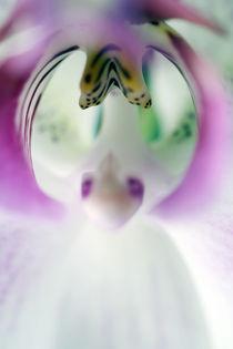 Orchidee von Jens Berger