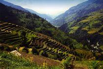 Nepal - Annapurna Himal, Reisfelder von Karel Plechac