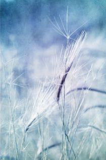 roadside blues by Priska  Wettstein