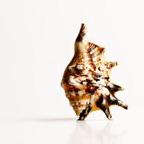 mussel 2 von Erinç Baydemir