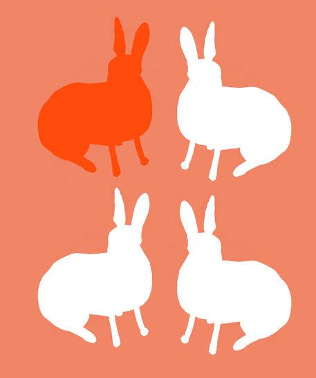 Rabbit-board