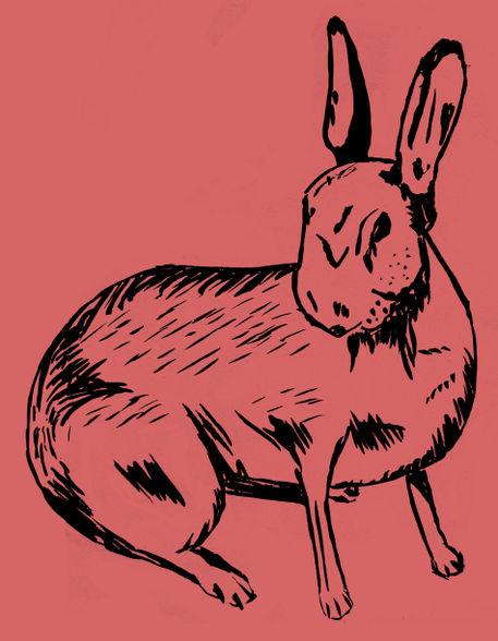 Rabbit-lines