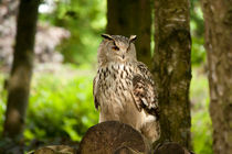 eagle owl by deanmessengerphotography