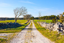 Small limestone gravel road on Gotland, Sweden by kbhsphoto
