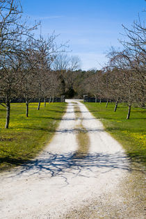 White limestone road in early spring on Gotland, Sweden von kbhsphoto