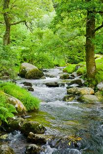 Small stream in summer by kbhsphoto