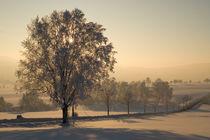 'Winterabend' von Jürgen Mayer