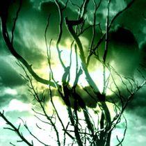 Märzsonne. von Bernd Vagt