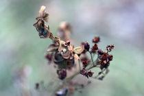 Pflanze von Jens Berger