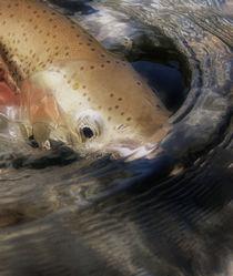 Dreamy Fish Face 1 by Debra  Carr Brox