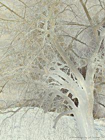 frosted tree von zahara-dzignz-2011