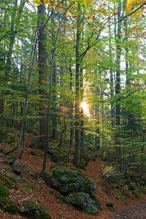 Letztes Sonnenlicht von Jürgen Mayer