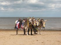 In the Donkey Ride Que by Sarah Couzens