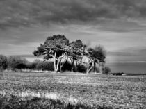 3 Trees by Sarah Couzens