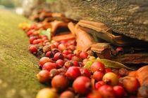 lost berries