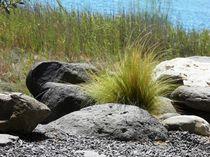 Gras and Stones by David Pischzan