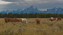 Wyoming-horses-brox-221