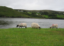 Irlanda-15