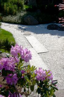 Lila Blumen von Thomas Train