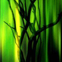 Grünes Bild mit Strauch im Quadrat. von Bernd Vagt