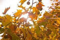 Herbstblätter von Thomas Train