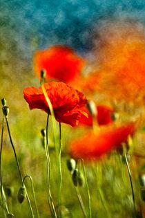 Rote Mohnblumen by Nailia Schwarz